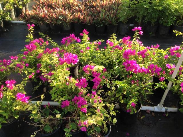 Pro Plus Gardening Services Pro Plus Gardening Services Cayman Islands
