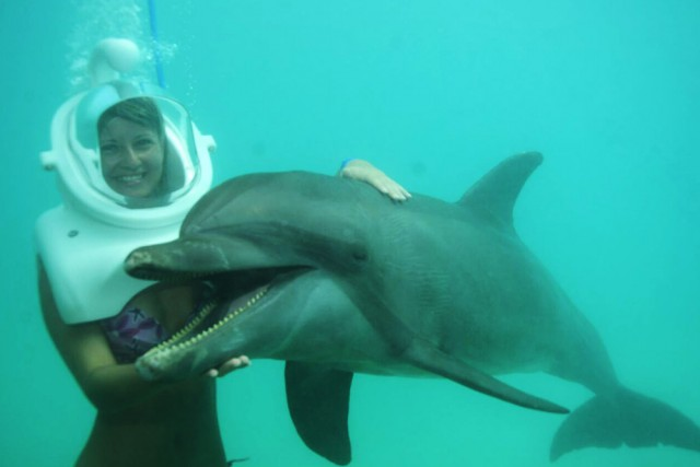 Dolphin Discovery Dolphin Discovery Cayman Islands