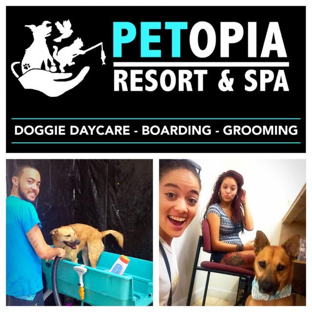 Petopia Resort & Spa Petopia Resort & Spa Cayman Islands