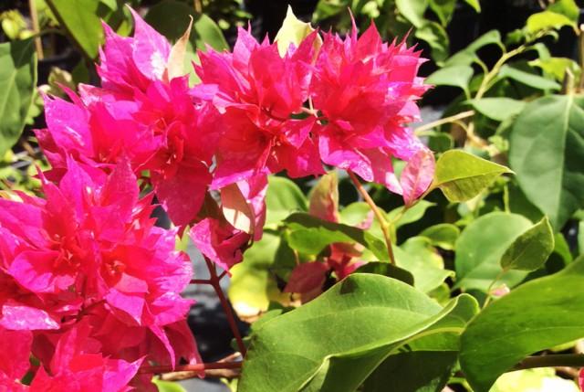 Power Flower Ltd. Power Flower Ltd. Cayman Islands