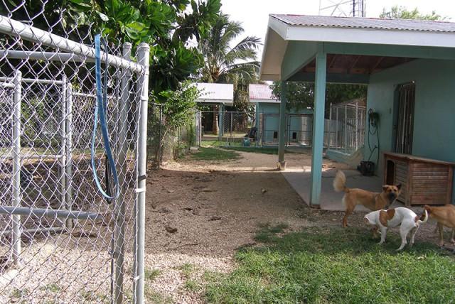 Cayman Pet Paradise (Cheval Ranche) Cayman Pet Paradise (Cheval Ranche) Cayman Islands