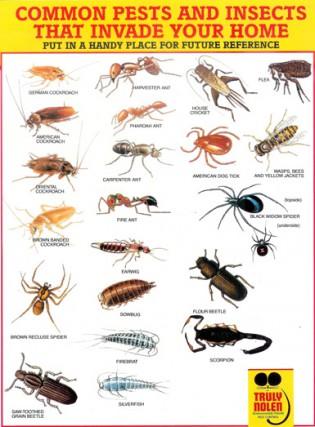 Truly Nolen Pest Control Truly Nolen Pest Control Cayman Islands