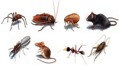 Browns Pest Control Browns Pest Control Cayman Islands