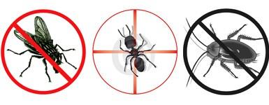 Browns Pest Control Browns Pest Control Cayman Islands