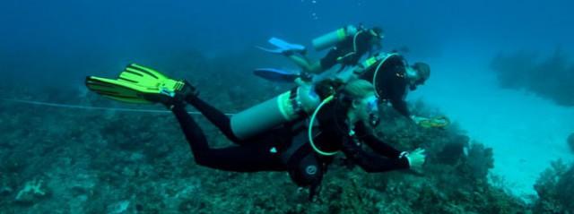 Central Caribbean Marine Institute ( CCMI ) Central Caribbean Marine Institute ( CCMI ) Cayman Islands