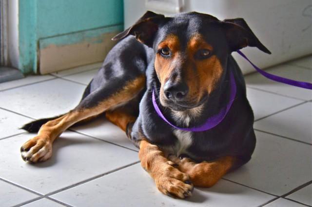 Cayman Islands Humane Society Cayman Islands Humane Society Cayman Islands