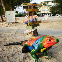 Cayman Islands Painted Iguana in front of Global Direction Sign