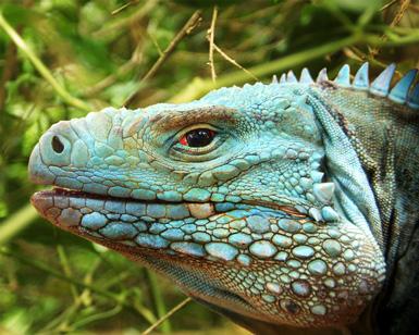 Blue Iguana Restaurant Cayman Islands